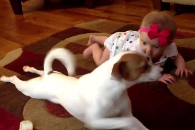 赤ちゃんにハイハイを教えてあげる犬