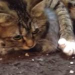 子猫を全身で守る母猫に涙が(´;ω;`)ブワッ【動画】