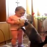 【動画】赤ちゃんから子猫を取り返す親猫がスゴイ! これぞ親子愛