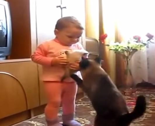 猫と赤ちゃん 動画