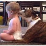 【動画】赤ちゃんが犬に体を舐め続けさせる光景