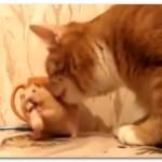 【動画】リアルトムとジェリーな猫とハムスターが面白すぎ( ,,>з<)ブッ