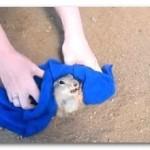 【動画】穴にハマった太り過ぎた小動物!必死な様子が可愛い