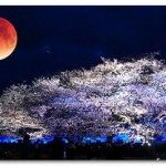 4月4日は皆既月食と夜桜が奇跡のコラボ!見る方法は?