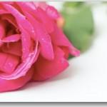 宇多田ヒカルの新曲【花束を君に】解禁!視聴方法は?【動画】